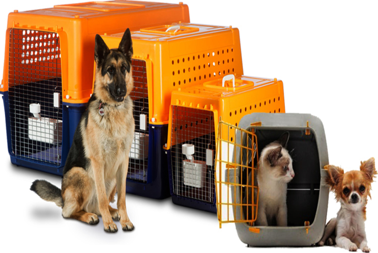 HOW TO KEEP YOUR PETS CALM AND STRESS-FREE DURING RELOCATION